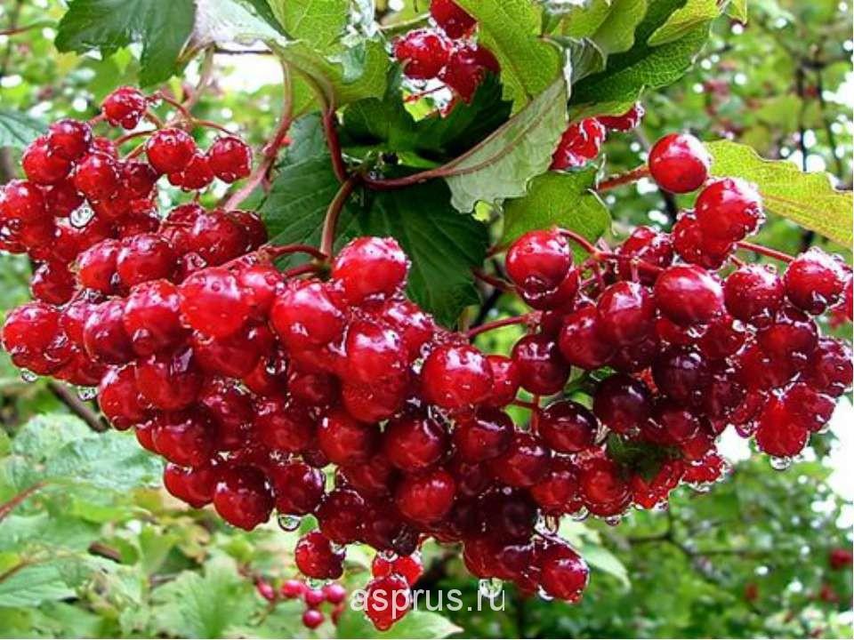 Картинки по запросу ягоды в осеннем лесу