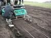 Укладка капельных линий машиной Ортифлор ТС-100  на плантацию земляники
