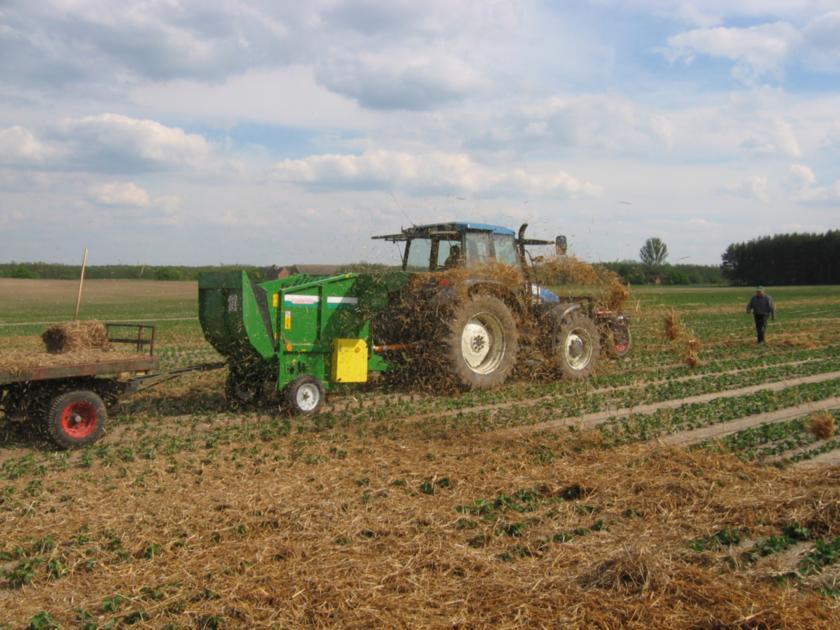 Разбрасывание соломы  на плантацию земляники