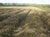 Укрытие плантации земляники соломой