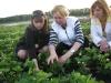 Специалисты Жбанова О.В., Быстрая Г.В. и Зуева И.М. на плантации интенсивной