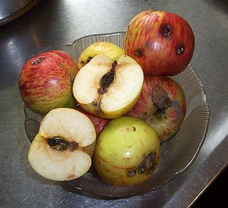Повреждения плодов