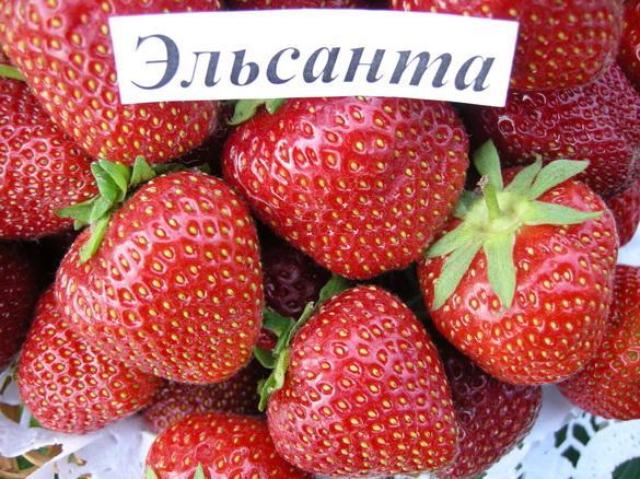 desertn_sorta_zeml_mukhanin-13