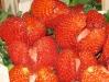 Растрескивание ягод земляники из-за нехватки воды
