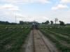 Платформы для прополки и удаления цветоносов на маточнике земляники