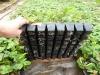Выращивание рассады земляники в кассетах в защищенном грунте