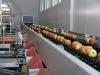 Сортировочная линия для плодов (фото Eberhard Makosz)