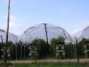 Выращивание ежевики по интенсивной технологии в пленочных укрытиях