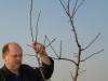 Удаление сильной боковой ветви в первый период формирования