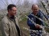 Формирование деревьев алычи крупноплодной в ЗАО Дружба Краснодарского края