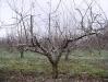 Снижение высоты дерева