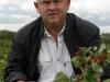 """Муханин И.В. председатель АСП РУС на плантации плодоносящей малины сорта \""""Полька\"""""""