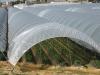 Интенсивная технологии призводства ягод земляники ремонтантного сорта Сан Андреас в защищенном грунте