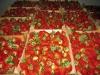 Тара для сбора и транспортировки ягод земляники