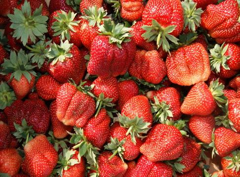 """Качество ягод сорта \""""Камароса\"""""""