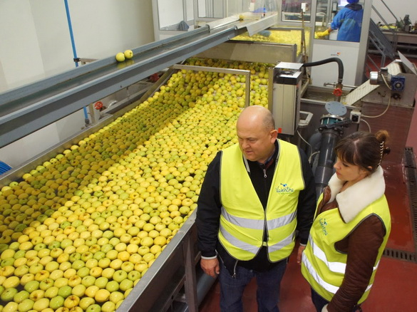 Муханин Игорь Викторович и Жбанова Ольга Владимировна наблюдают за перемещением яблок к сортировальной установке