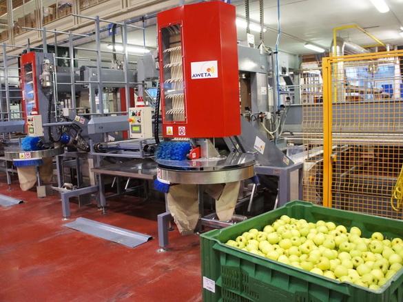 На последнем этапе яблоки бережно укладываются в контейнер  при помощи специальных механизмов, изображенных на фотографии.