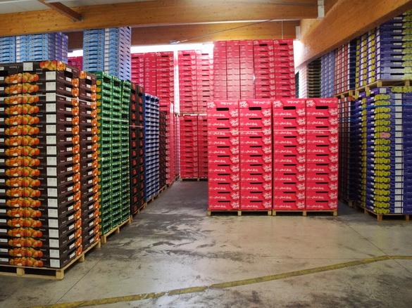 Собранные картонные коробочки для упаковки яблок. Каждый вид коробочки предназначен для упаковки конкретного сорта