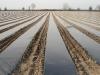 Фото 3. Мульчирующая пленка для закладки 4-х рядной плантации земляники