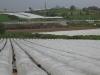 Фото 5. Мини туннели для выращивания земляники