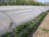 Фото 31. Мини-туннели для земляники в ООО Корочанский плодопитомник, Белгородской области