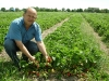 Фото 32. Плодоношение земляники в ООО Снежеток Тамбовской области