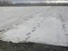 Фото 35. Укрытие плантации земляники в зимний период агроволокном
