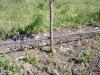 Фото 42. Капельное орошение в садах