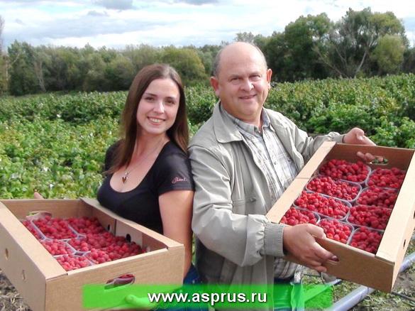 Предложение по малине 2012 фото
