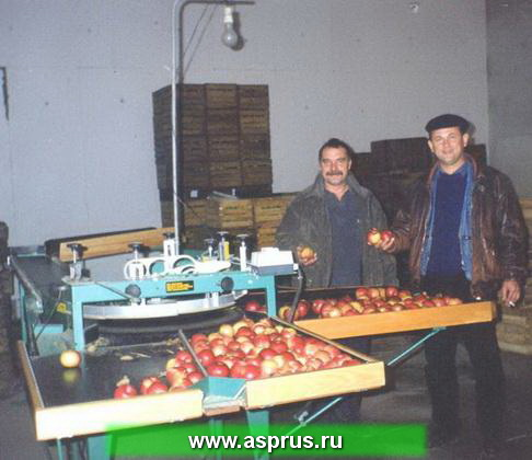 mashsortirovka_3_1.jpg