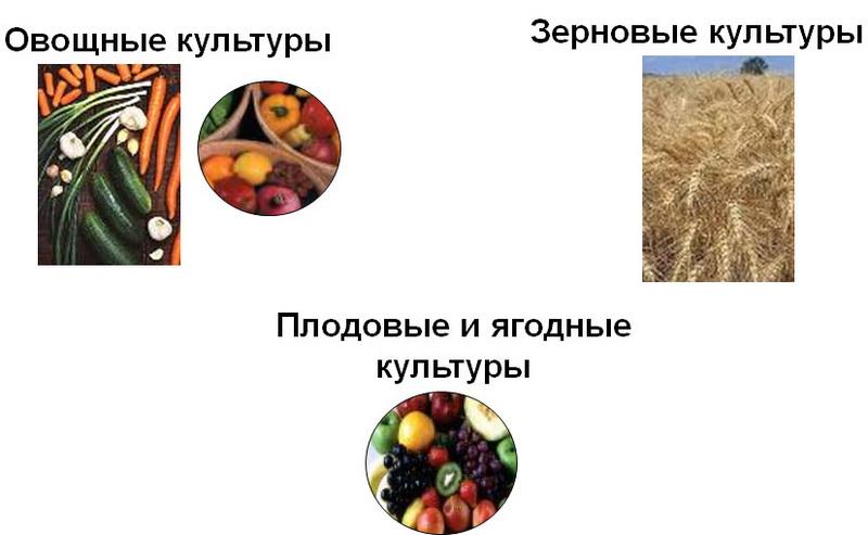 Широкий спектр использования ЛАННАТ ® на 165 культурах, против более чем 140 видов вредных насекомых