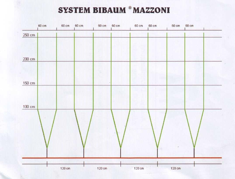 Система Bibaum® Mazzoni