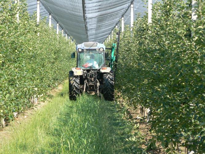 Механизированная обрезка в яблоневом саду с конструкцией кроны по типу «Бибаум»
