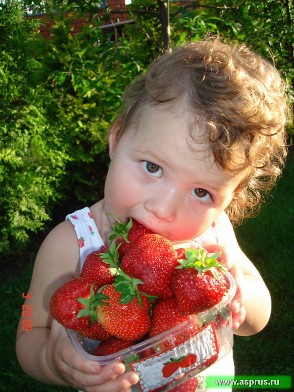 Пути увеличения производства витаминной продукции за счет инновационных промышленных технологий получения внесезонных урожаев ягод