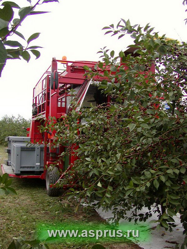 вишня, черешня, сорт, сад, обрезка, оборудование, машины