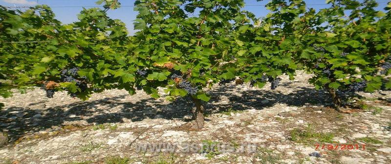 виноград | Результаты поиска |