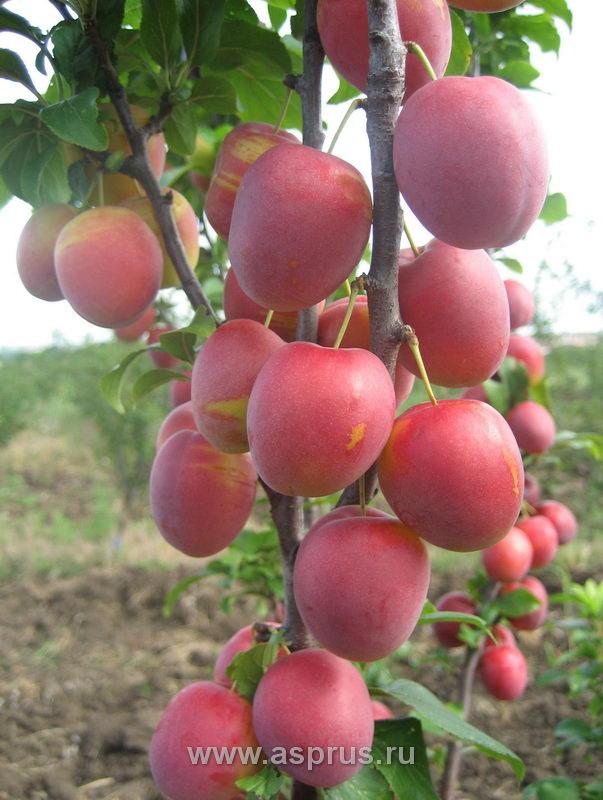 Как открыть фермерское хозяйство в БеларусиВсё для фермеров