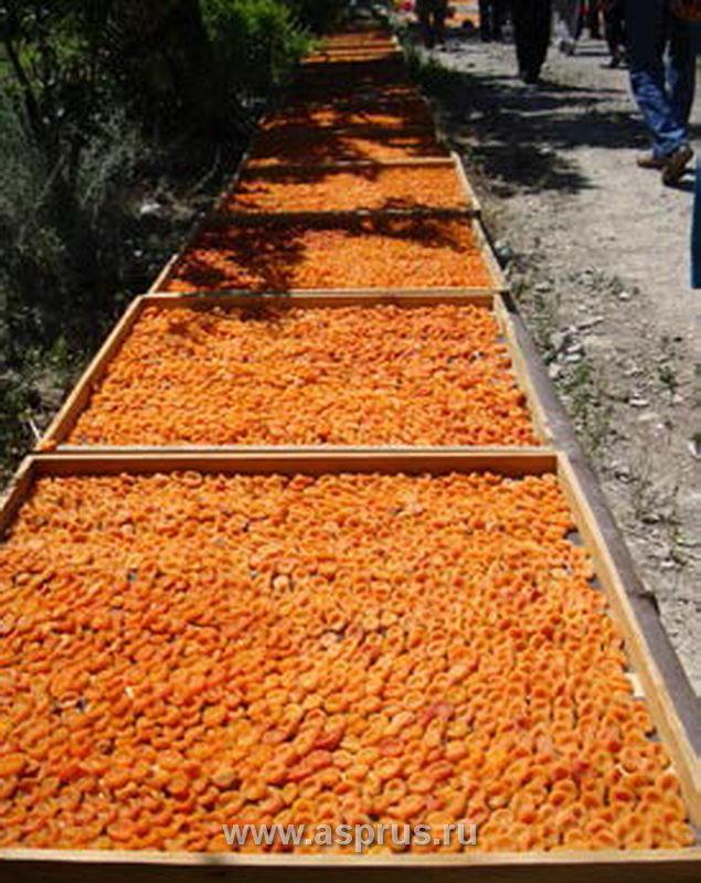 Сушка персиков в домашних условиях 947