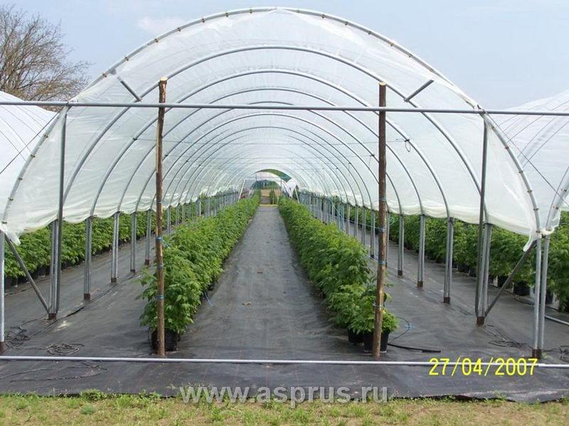 Выращивание малины в туннелях