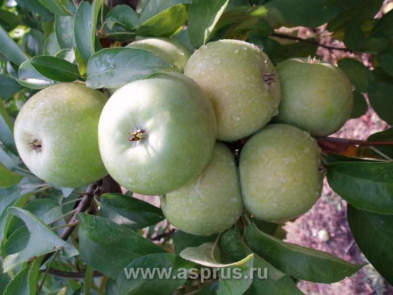 пенетрометр для фруктов ft 327 инструкция