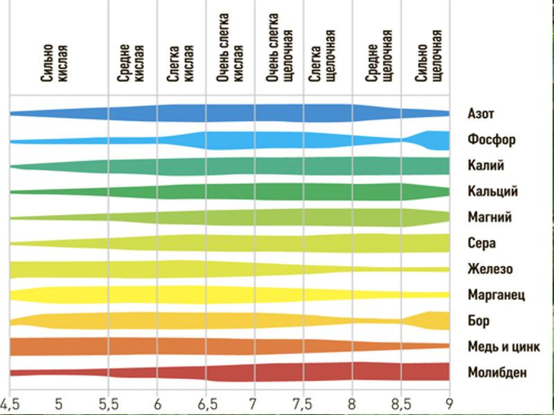 Влияние pH почвы на доступность корням макро- и микроэлементов в почве.