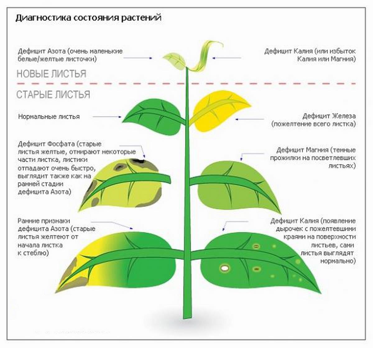 Практическая работа подсчет листьев и плодов