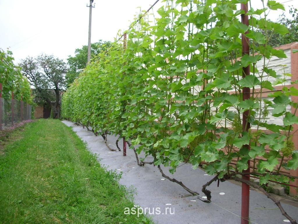 Подставки под виноград фото