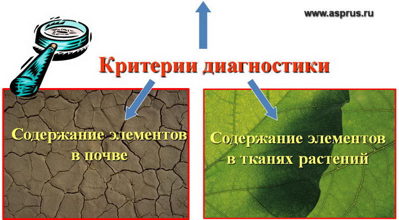 земляника, оборудование, питомник, полив, удобрение, удобрения, эффективность, фертигация