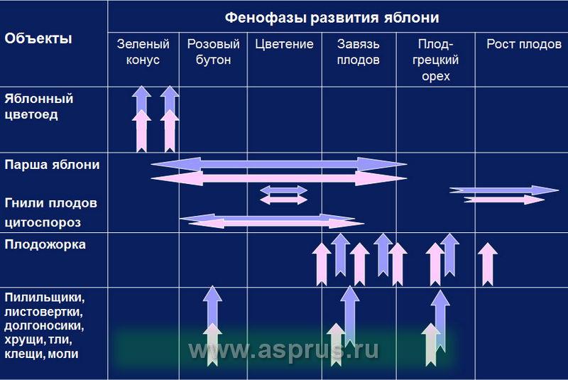 Схема гербицидных обработок в