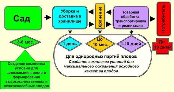 Основные этапы и условия жизни плодов и продвижения их до  потребителя