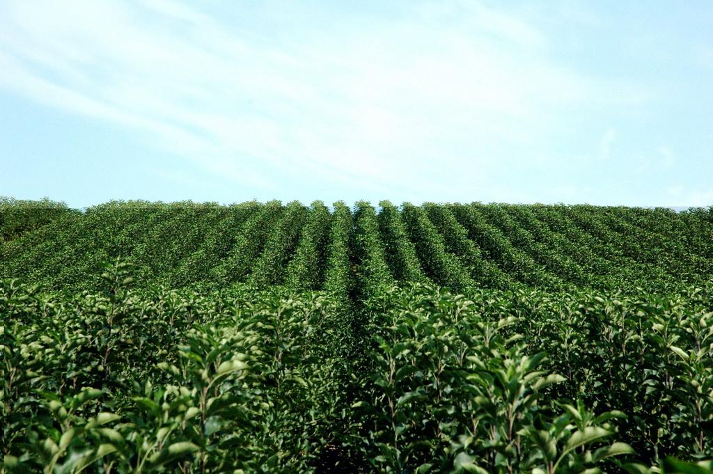Качественная почва гарантирует обильный урожай