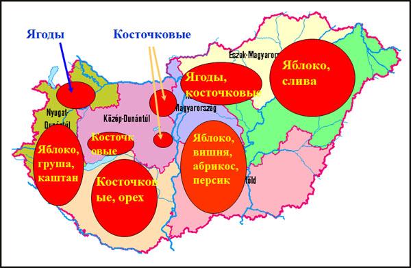 Главные регионы-производители Венгрии