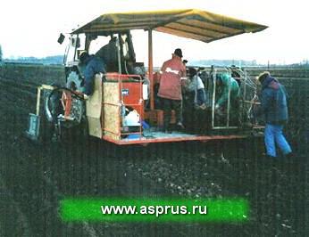 Отделение отводков с использованием выкопочного комбайна