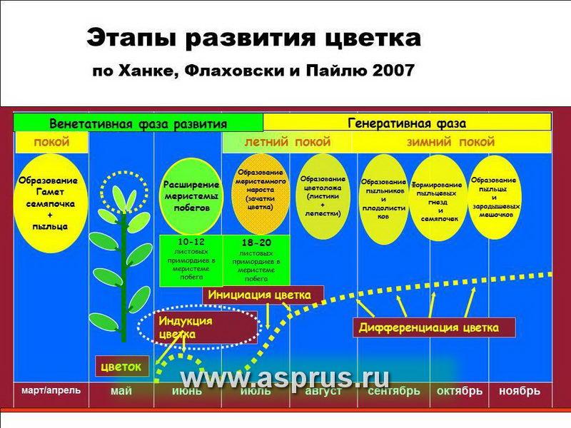 биохим, защита растений